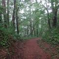 写真: 桧原湖周りの林道