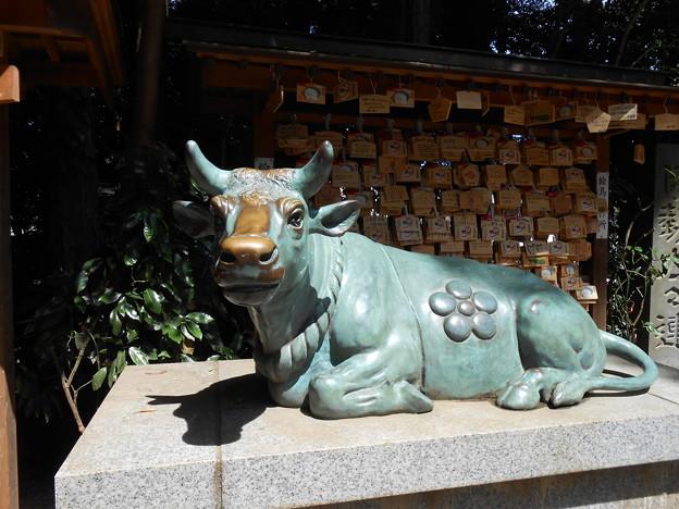 武州岩槻総総鎮守 久伊豆神社 なで牛