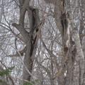 写真: ねじれた木
