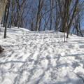 写真: 雪融けて足跡深くなる