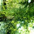 タヌコの水遊び