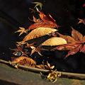 重ね染めの秋~5