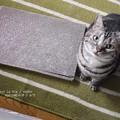 Photos: 春眠暁を覚えずな猫。