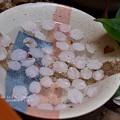 写真: 外猫水も桜風味。