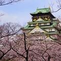 桜の大阪城