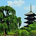 東寺  新緑の不二桜と五重塔