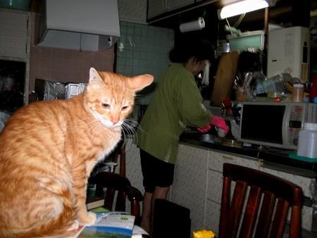 2006年03月28日の茶トラのボクチン(1歳半)