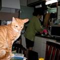 写真: 2006年03月28日の茶トラのボクチン(1歳半)