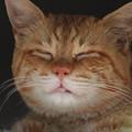 写真: 2009年04月29日の茶トラのボクチン(もう直ぐ5歳)