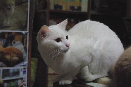 2015年5月18日のシロちゃん(2歳)