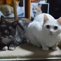 2015年5月30日のシロちゃん(2歳)とクロちゃん(3歳)