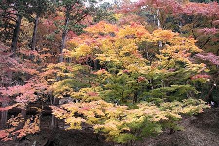 香嵐渓:五色楓