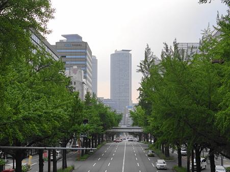 銀杏並木新緑の桜通り