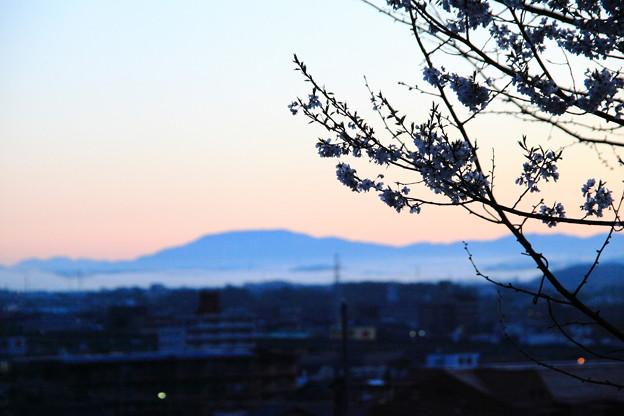 曙の恵那山と桜