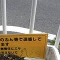 Photos: 猫糞~横浜市