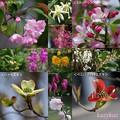 Photos: 木々の花<春コラ>