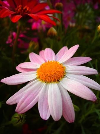 春の花 寄せ植え1
