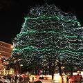 樹木の輝き・仙台