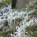 写真: 草木も凍る・・・