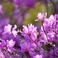 Photos: わたしの春に逢いに。
