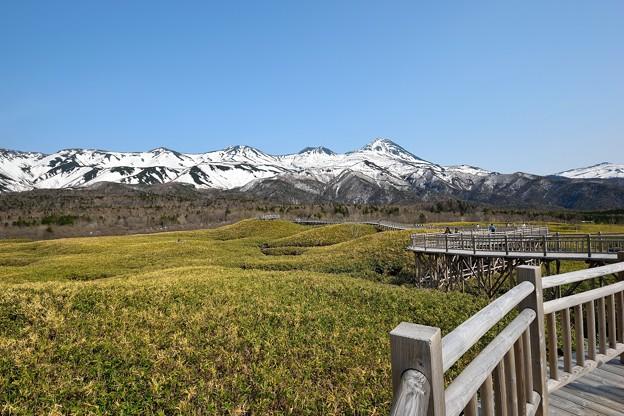 知床連山と遊歩道 (3)
