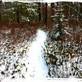 写真: White Path 1-7-12