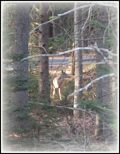 Oh Deer... 4-5-12