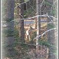 写真: Oh Deer... 4-5-12