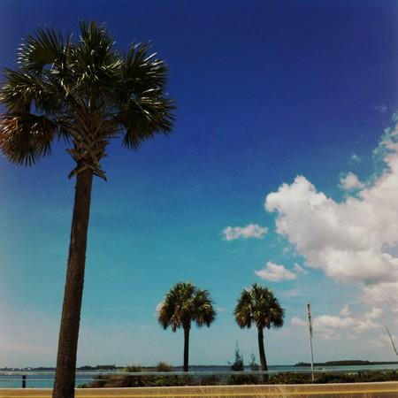 Palm Trees 3-12-15
