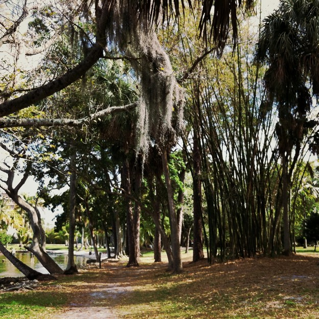 The Path with Spanish Moss 3-11-15