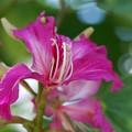 Hong Kong Orchid 3-11-15