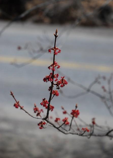 Photos: Female Flowers 5-2-15