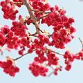 写真: 国立明石海峡公園(photo by D5100&SIGMA MACRO 105mm F2.8 EX DG OS HSM)