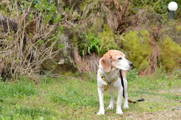 Photos: やれやれ、とんだ長い散歩だったね~