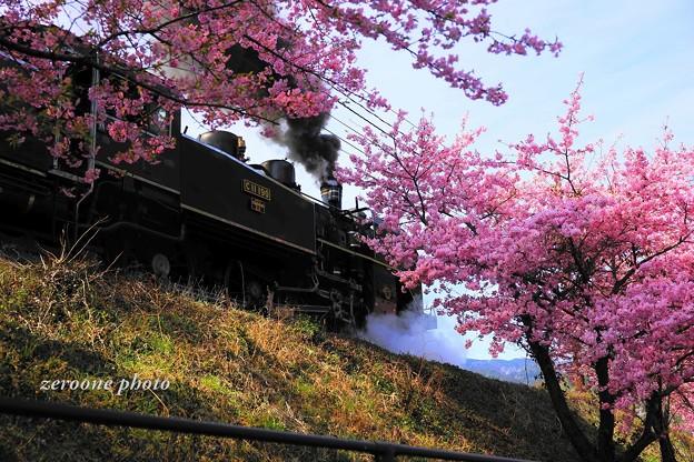 Photos: 春模様