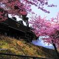 写真: 春模様