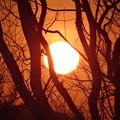 木間の朝日