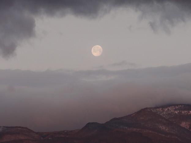 卯月 朝月