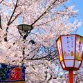 Photos: 円山公園3