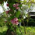 Photos: 150503散歩31