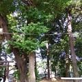 Photos: 150503散歩41