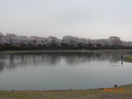 加賀フィッシングエリア2015年春