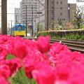 Photos: 花道を行く