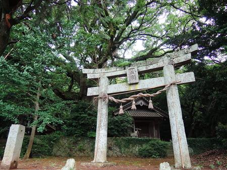 福津市勝浦 若宮神社の木