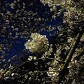 Photos: 善福寺川緑地公園2