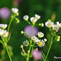 Photos: ただ優しく強い花