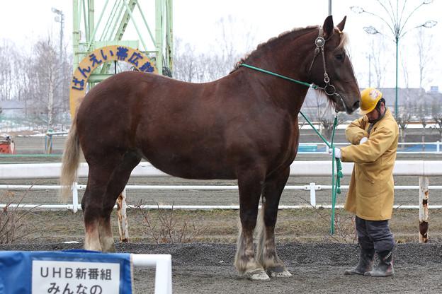 サカノタケヒメ_2(15/03/22・2R)