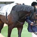 Photos: シゲルヒダカ パドック(15/04/05・4R)