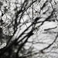 Photos: 花は移ろい