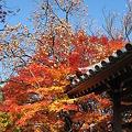 京都2007.常寂光寺4
